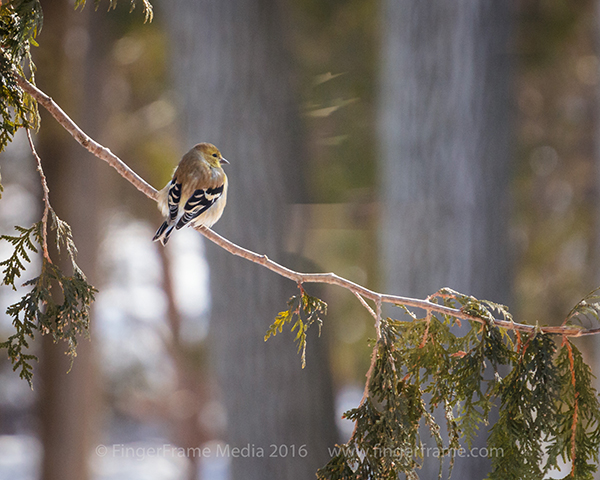 Image of a bird sitting on a tree branch