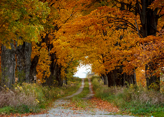 Image of a country lane with fall foliage